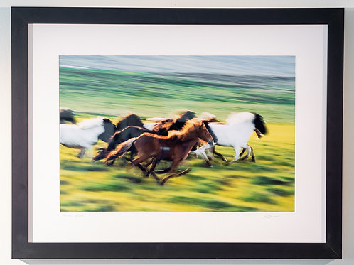 Gallery Print - Icelandic Horses