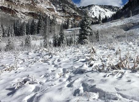 Elk Tracks in the Snow
