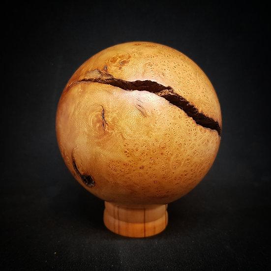 Briar root ball #6