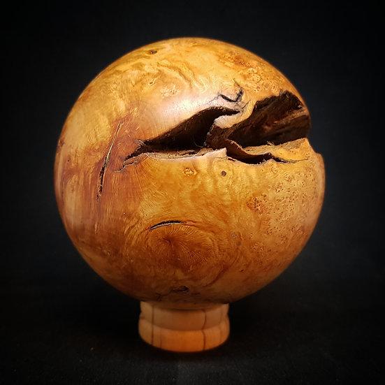 Briar root ball #2