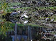 Egrit, Beechmont Lake
