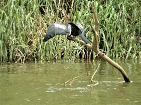 Tropical Bird, Costa Rica