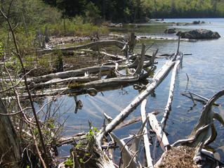 Bayard's Pond