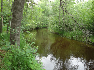 Wisconsin Stream