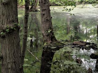 Swamp 3