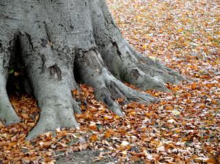 Autumn Elephant Feet