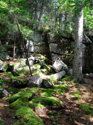 Acadia Woodland