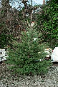 Blue Spruce 2019 1600x80 res.jpg