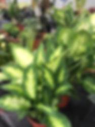 foliage plants.jpg