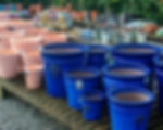 blue heritage pots