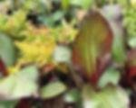 canna and banana plants.jpg