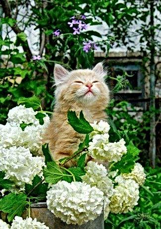 gato e florais