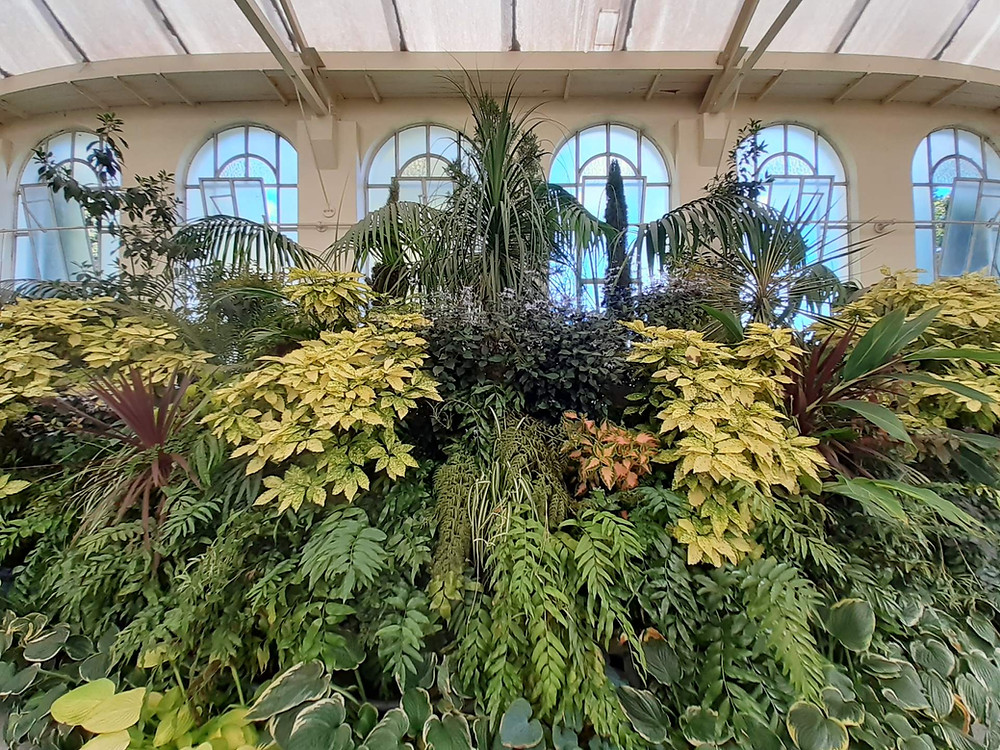 Indoor plant display at John Hart Conservatory, Launceston