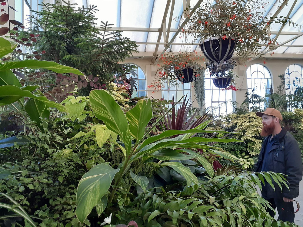 A man looks at the plants on display in the John Hart Conservatory in Launceston