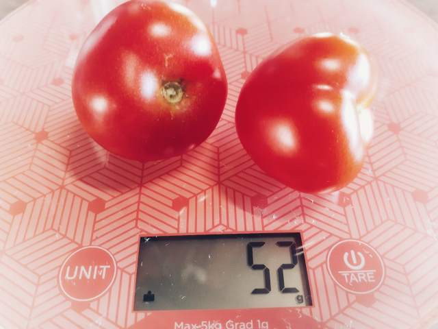 Two ripe tomatoes being weighed on a kitchen scale