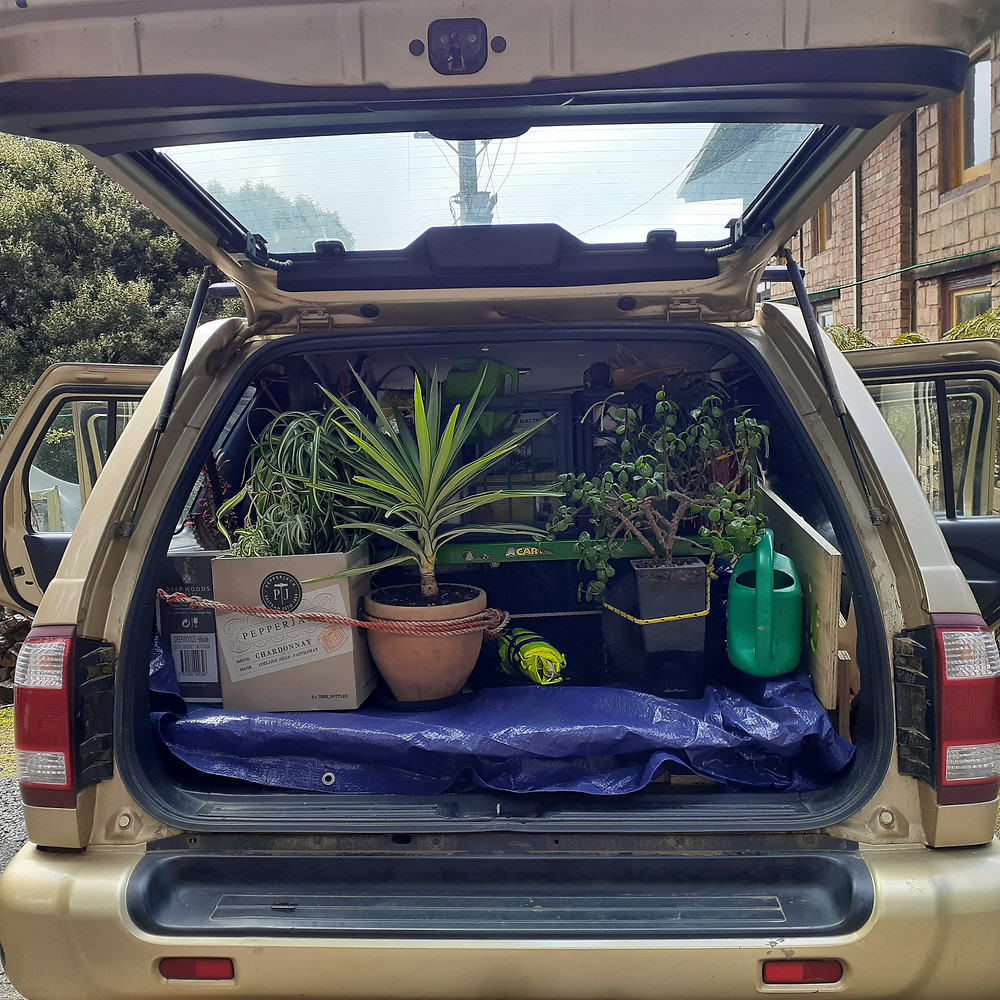 A car boot filled with indoor plants for an event display