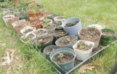 Freshly replanted seedlings – May 13, 2012