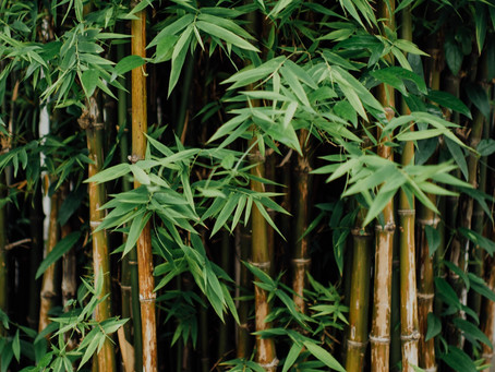 So Why is Bamboo sustainable?