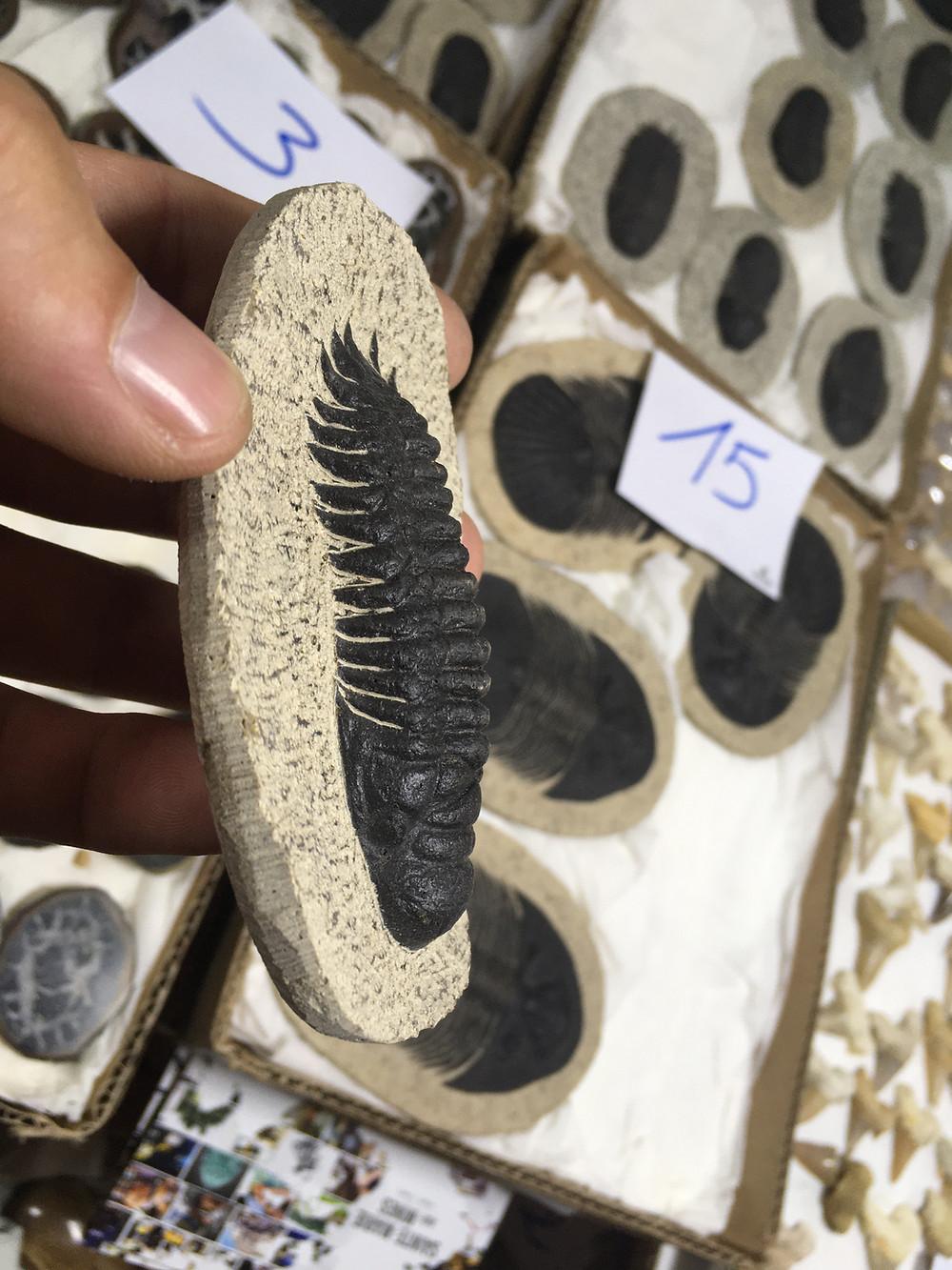 fake trilobite