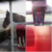 Customer photos on horse walker.jpg