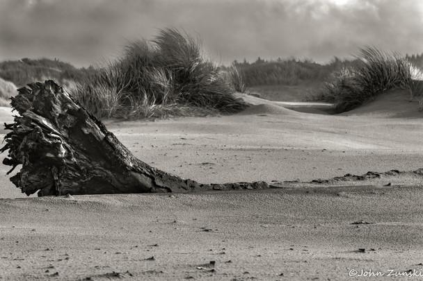 November Dunes