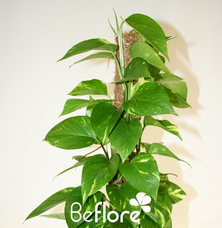 plantes vertes (6)