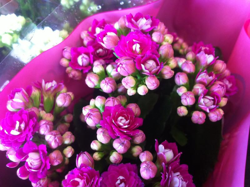 kalankoe promotion fleurs Beflore