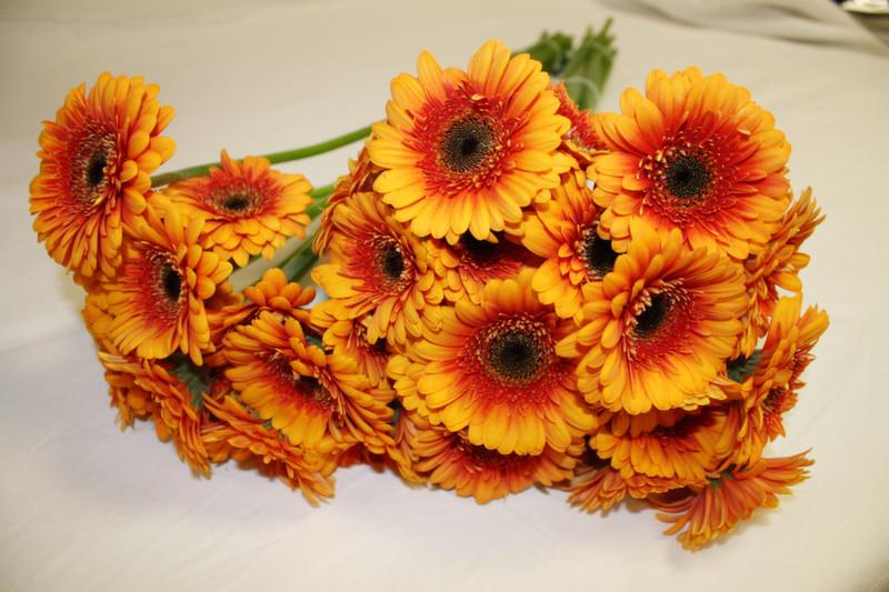 germinis promotion fleurs Beflore