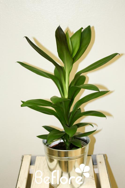 plantes vertes (1)