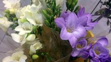 Le bouquet de 5 Freesias 1€99