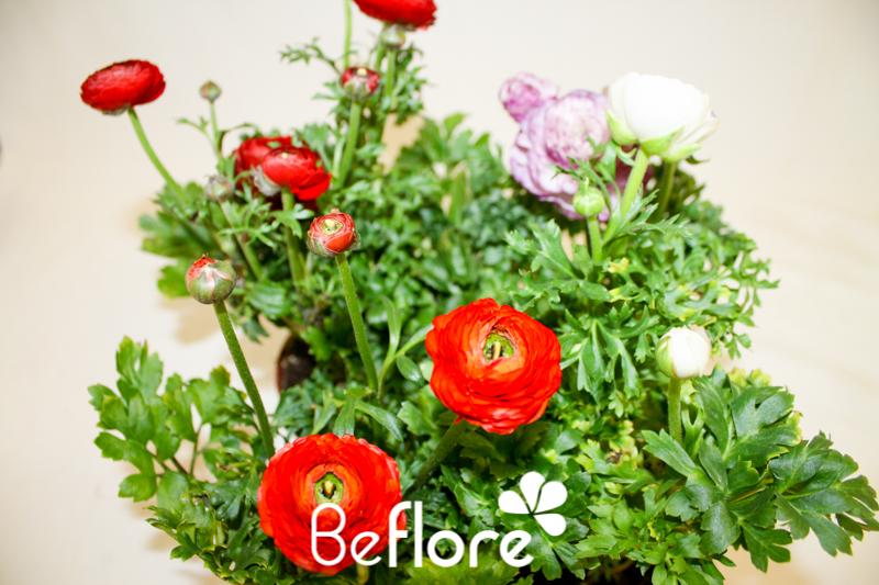 plantes fleuries (42)