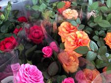 Le petit pot de rosier 2.50 €