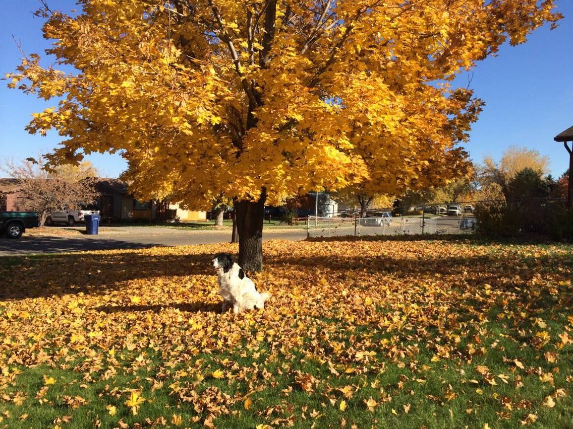 Fall Color In Colstrip