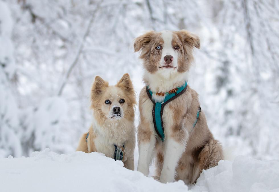 Fotos Winter 26Dec20-11.jpg
