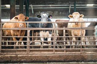 Farm 20.jpg