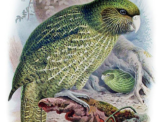 Consider the Kakapo