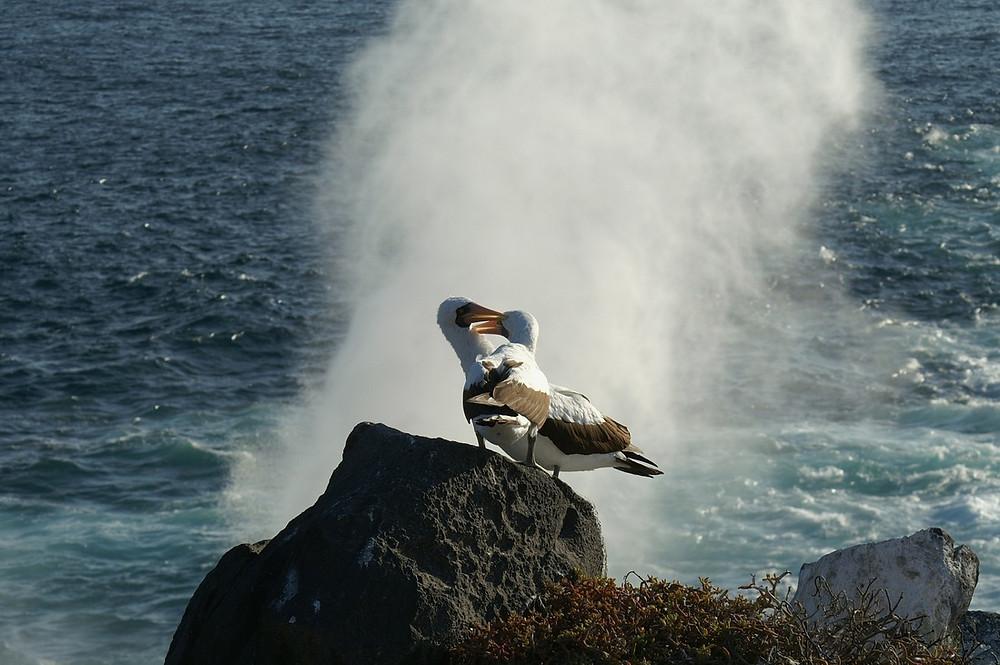 Albatrosses Image Courtesy of Pixabay @ BGDesign