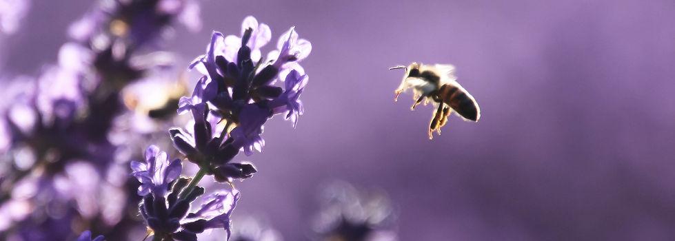 Farsight Drones, Honeybee, Photography