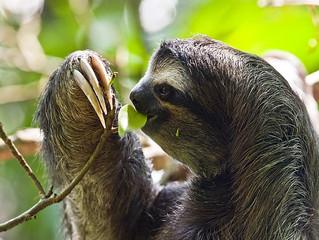 Sloth News Day