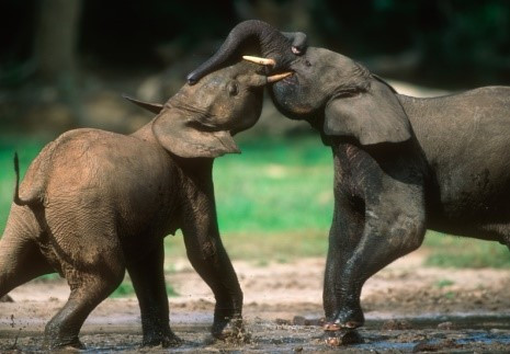 Image © African Wildlife Foundation 2016