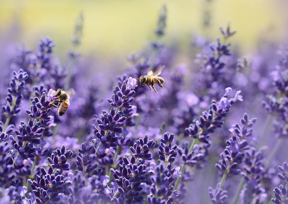 Honey Bee meeting Image courtesy of Pixabay @ castleguard