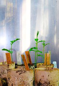 Green shoots.jpg