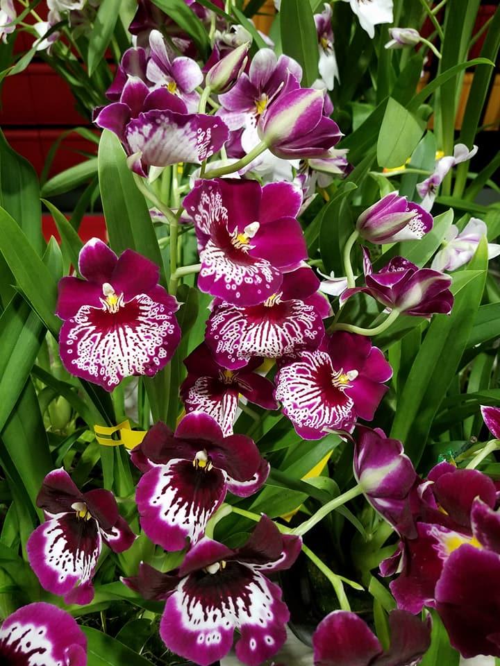 Windward Orchid Society