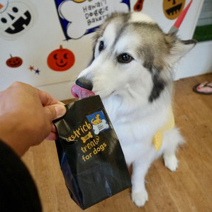 October 20 & 28 - Trick or Treats for Dogs