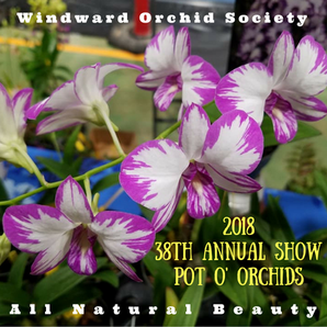 On The Go Again:  Windward Orchid Society