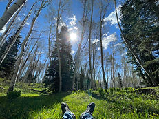 AspenTrees2.jpg