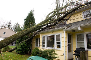 Tree Damage Repair