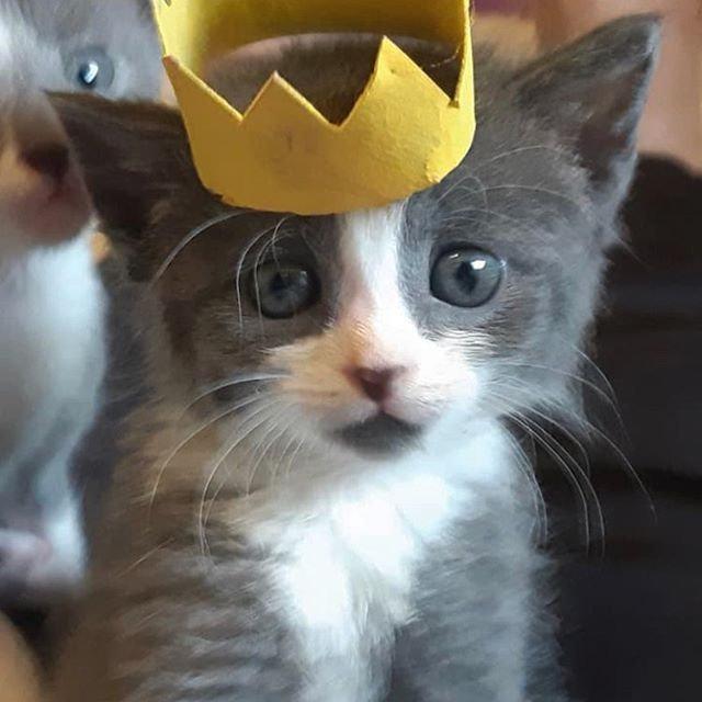 A star is born #michellesrescue #kittens