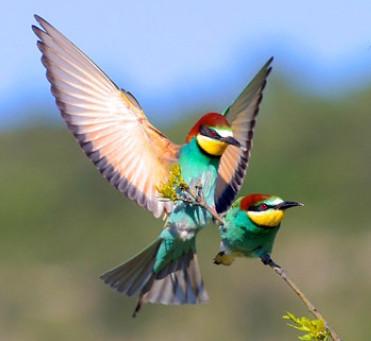 Les oiseaux de malheur et les oiseaux de bonheur - Sagesse africaine