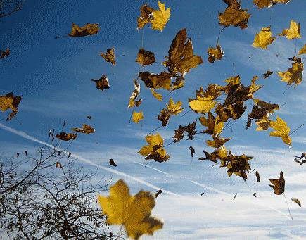Le vent d'automne disperse les feuilles mortes - Conte Zen, Japon